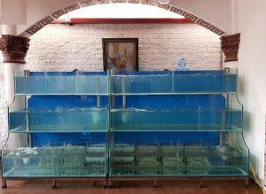 Bể hải sản 3 tần chồng kính